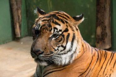 Zoo in Prag - Der wahrscheinlich schönste Zoo in Europa