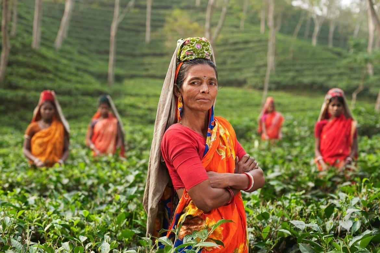 Reisefotografie Sri Lanka Teeplantage