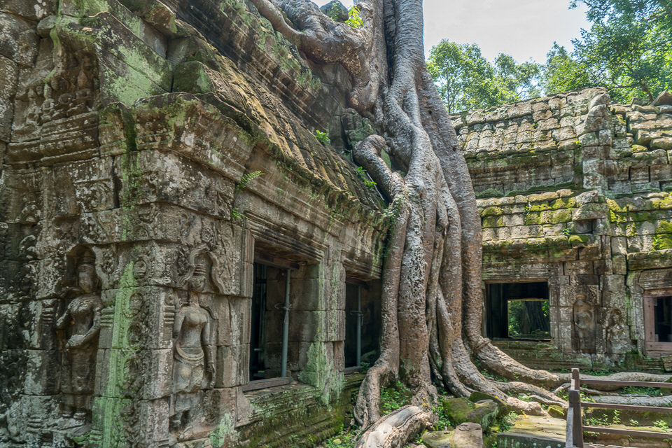 Angkor Archaeological Park ta prohm