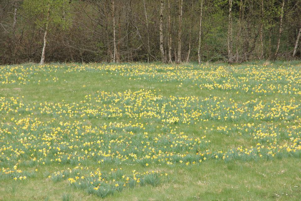 Frühling in Deutschland: 5 schöne Spaziergänge in NRW